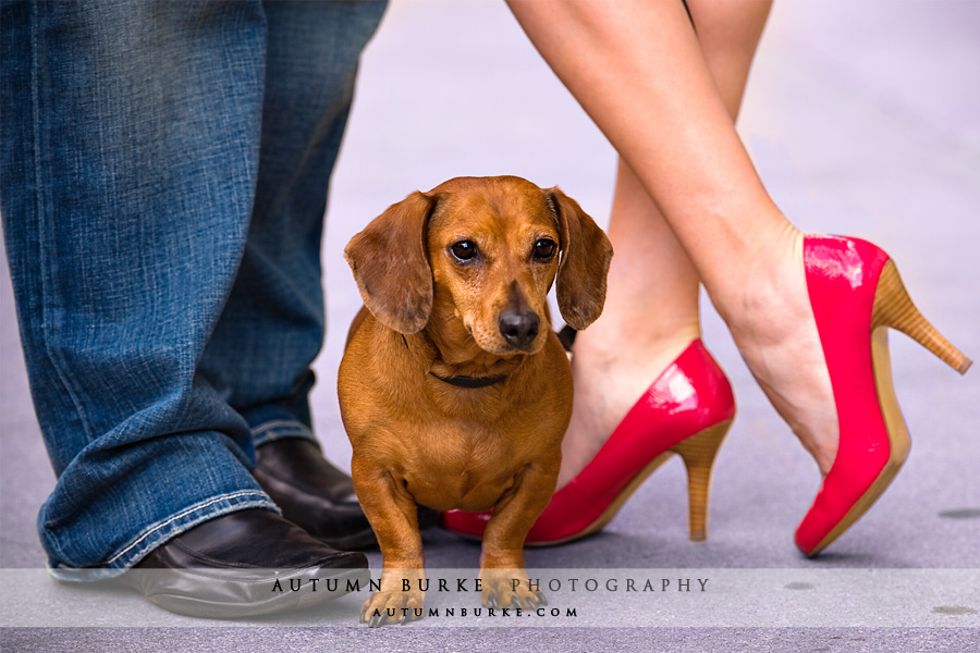 engagement portrait session shoes with adorable small dog