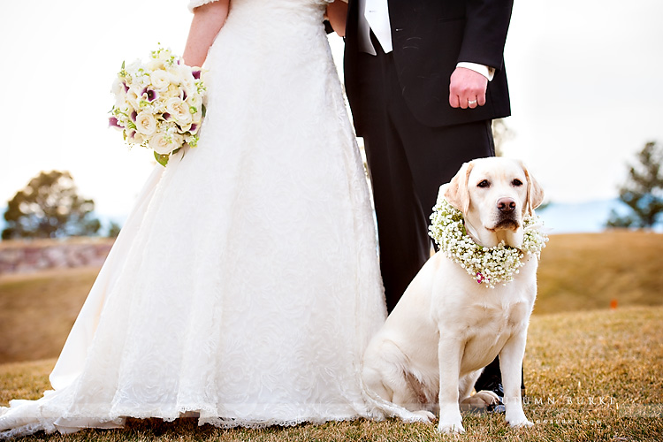 the sanctuary castle pines colorado wedding bride and groom with dog portrait