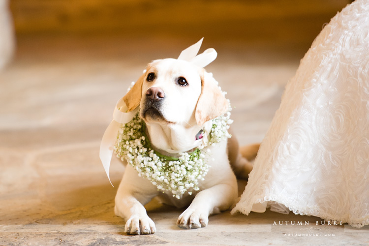 the sanctuary wedding castle pines colorado wedding puppy with floral garland