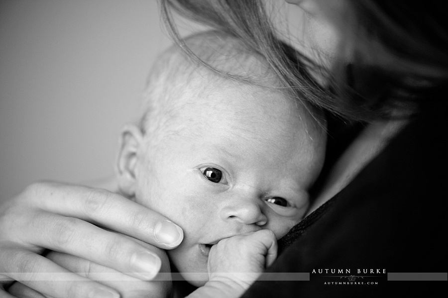 newborn baby portrait colorado family lifestyle photography