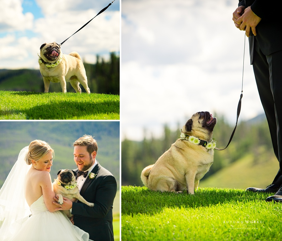 dog ring bearer keystone ranch colorado mountain wedding flower collar pug